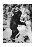 Bigfoot Film  1967