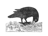 Crow  Historical Artwork