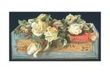 Roses in Cigar Box  Christmas Card