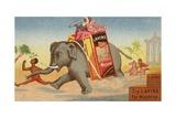 Elephant Running with Box of Washing Soap