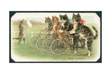 The Start  Cat Cycle Race  Christmas Card