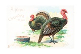 Turkeys  Christmas Card