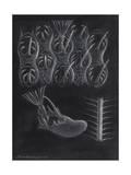 Bryozoa