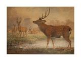 Manchurian Deer
