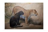 Leopards  1851-69