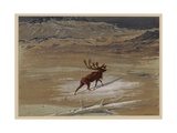 Stag  1871