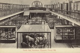 North Hall  Horniman Museum  Forest Hill  London