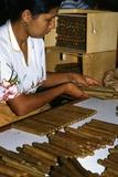 Woman Placing Cigars in a Box for Exportation  Santa Rosa De Copan  Honduras