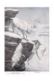 The Peary Caribou