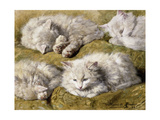 Studies of a Long-Haired White Cat  1896