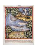 Tacuinum Sanitatis 14th Century Medieval Handbook of Health Man Looking for Amber by a River…