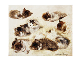 A Study of Kittens  1898