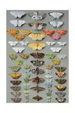 Sixty-Three Moths  Arranged Inthree or Five Irregular Columns