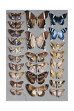 Twenty-Four Moths  in Three Columns  Mostly Belonging to the Family Noctuidae