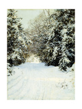 Snow-Laden Trees  1887