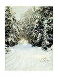 Snow-Laden Trees  1887