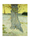 The Old Tree; Le Vieil If  1888