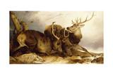 The Combat  1847