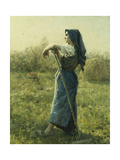 The Harvester  1892