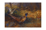 A Cock and Hen Pheasant at the Edge of a Wood  1897