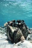 Giant Giant Clam