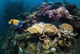 Kasi Maru Shipwreck And Fish