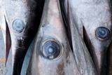 Freshly Caught Swordfish