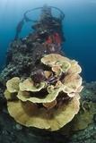 Kasi Maru Shipwreck And Coral