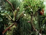 Epiphytic Bromelia