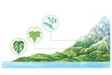 Plant Communities  Artwork