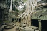 Roots of a Kapok Tree