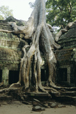 Roots of a Kapok Tree