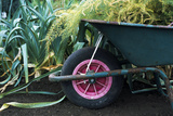 Wheelbarrow Full of Weeds
