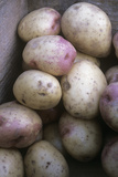 Potatoes (Solanum 'King Edward')