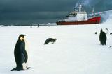 Emperor Penguins on Sea-ice  Antarctica