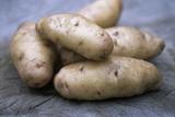 Potatoes (Solanum Tuberosum 'Anya')