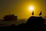 Shipwreck And Gulls