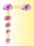 Stem Cell Development  Artwork