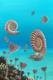 Ammonites In a Jurassic Sea