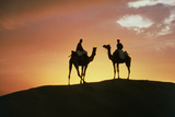 Silhouetted Camel Riders on a Sand Dune At Sunset
