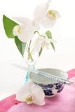 Orchid Flowers (Phalaenopsis Sp)