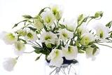Lisianthus Flowers (Lisianthus Sp)