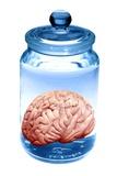 Preserved Brain  Artwork