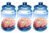 Preserved Brains  Artwork