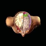 Brain And Vision  Artwork