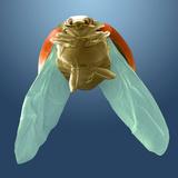 Seven-spot Ladybird Landing  SEM