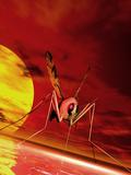Feeding Mosquito