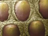 Komodo Dragon Skin  SEM