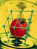 Conceptual Image of Genetically-engineered Tomato