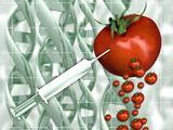 Genetically Engineered Tomatoes
